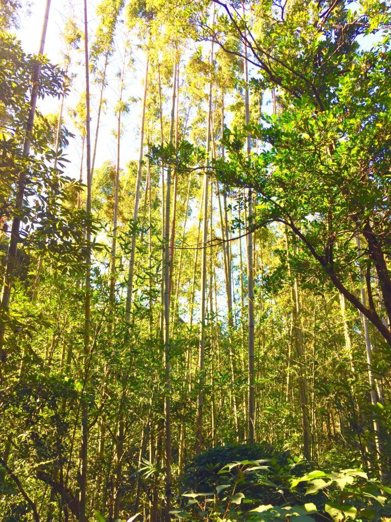 マダケの森。