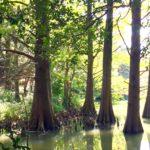 森林セラピー基地の役割とは?福岡県篠栗町九大の森。10/25(火)森の旅143日目。