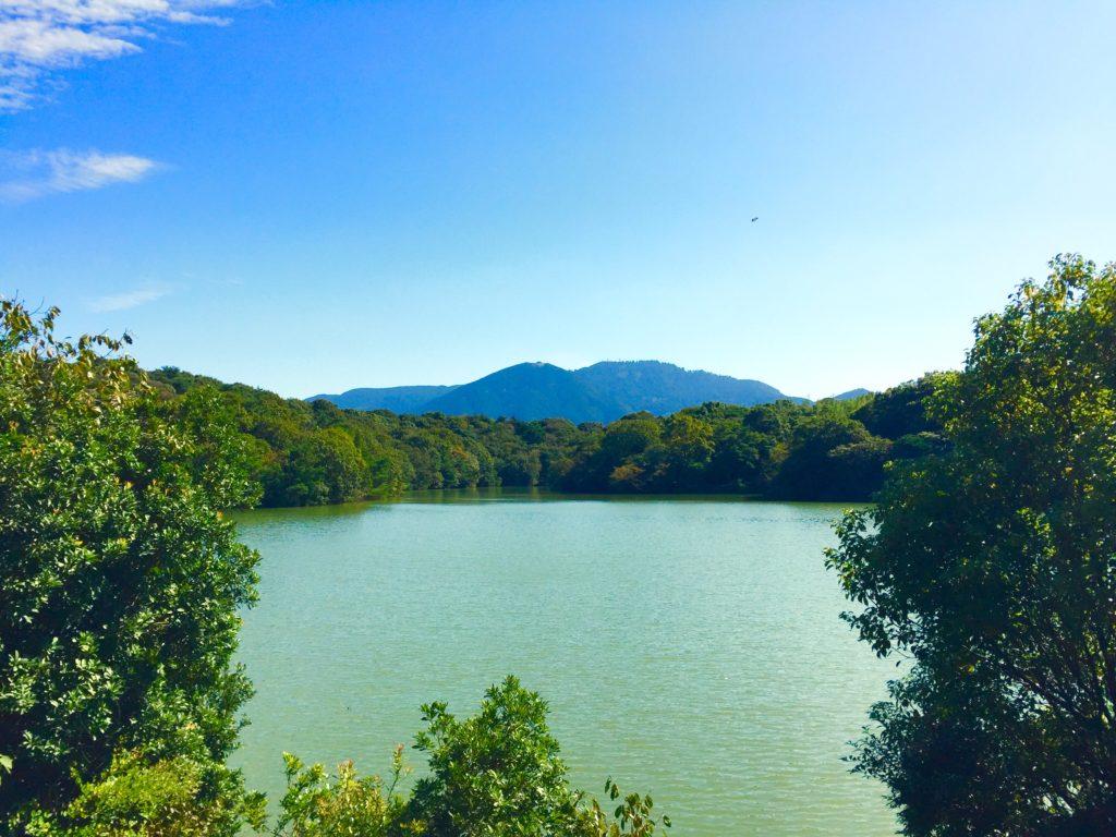 九大の森の湖。
