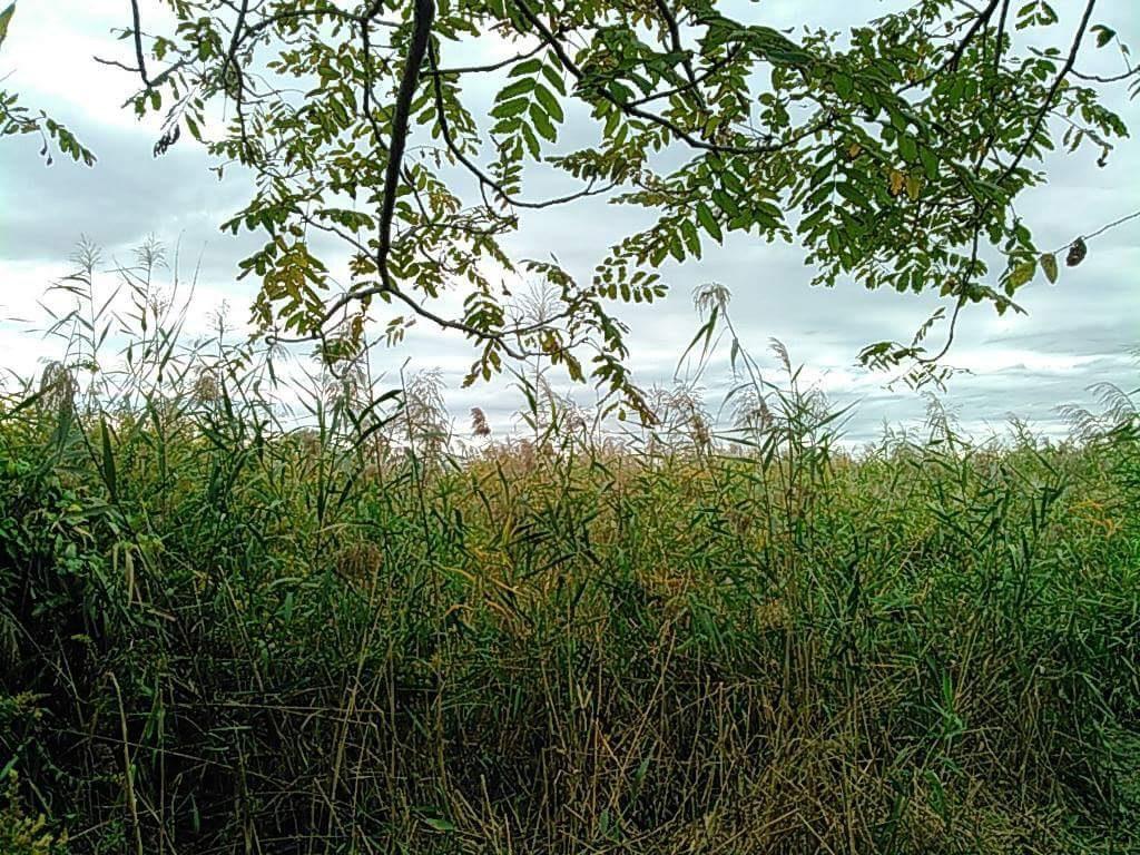 河川敷から見える風景。
