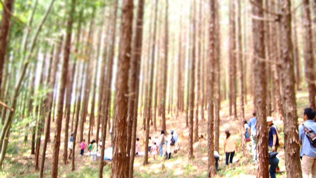 ヒノキの森を歩く。