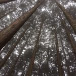 【福井】1/9(月祝)「冬の森に寝転んでみる。足羽山で森の歌会」@福井県福井市