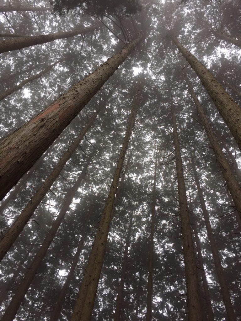 冬の森見上げる。