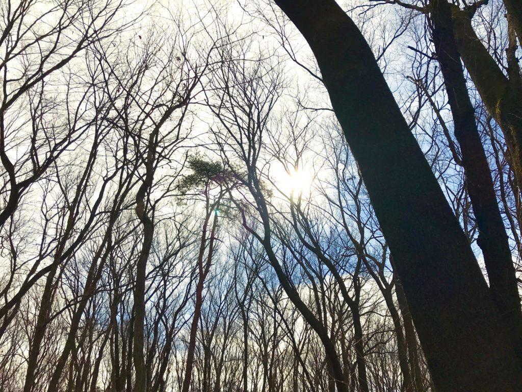 平地林空。