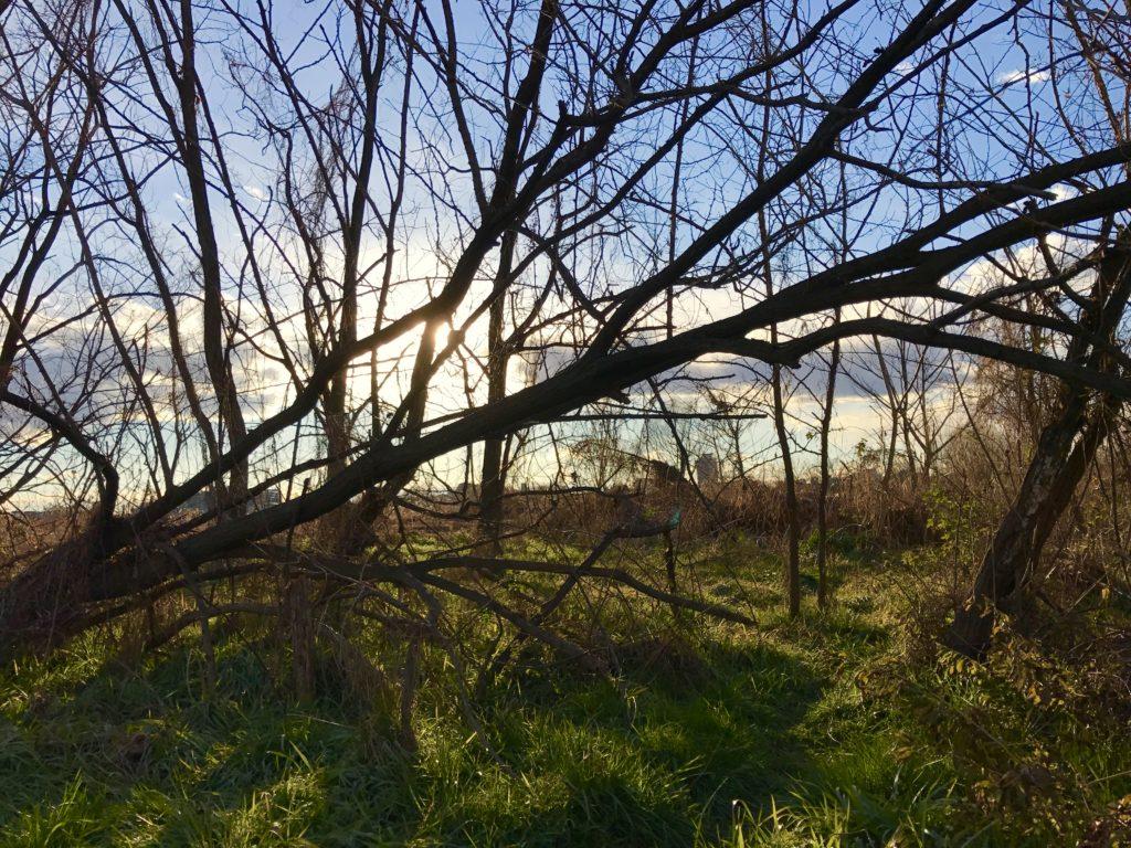河川敷に生きる樹木。