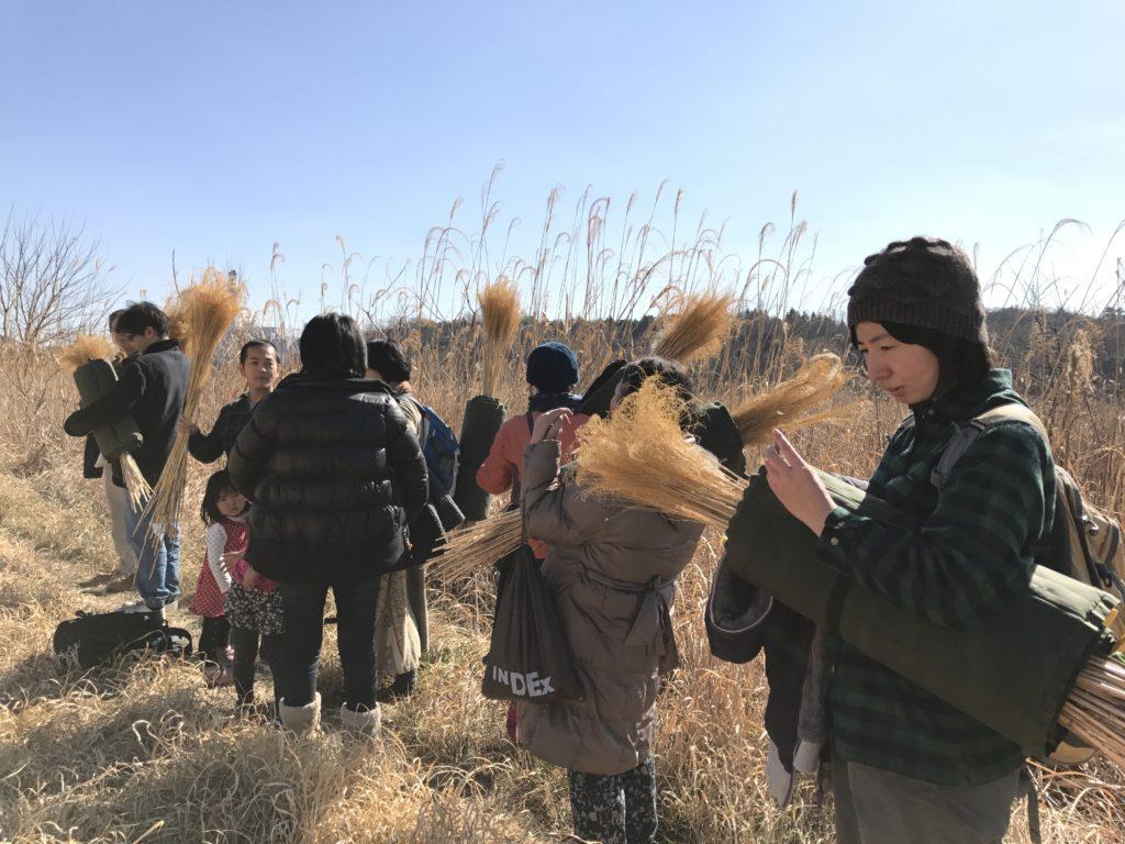 オギの収穫4