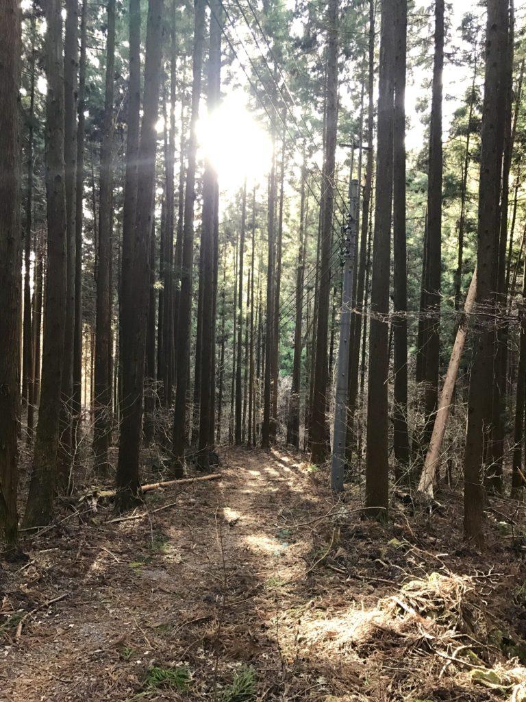 城峯山登山道。