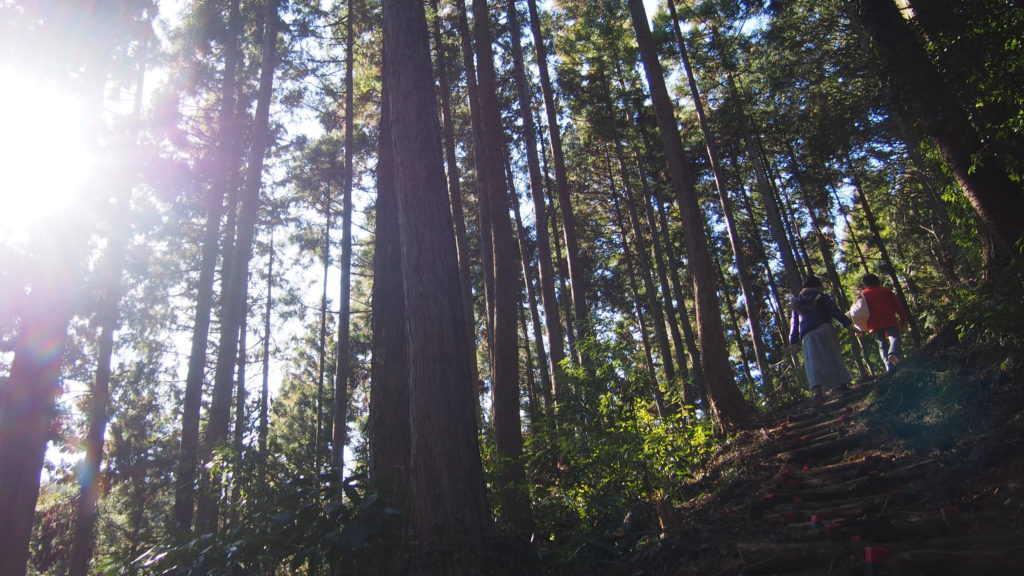 杉の木立2