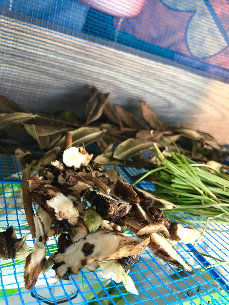 タンポポの根っこ乾燥。
