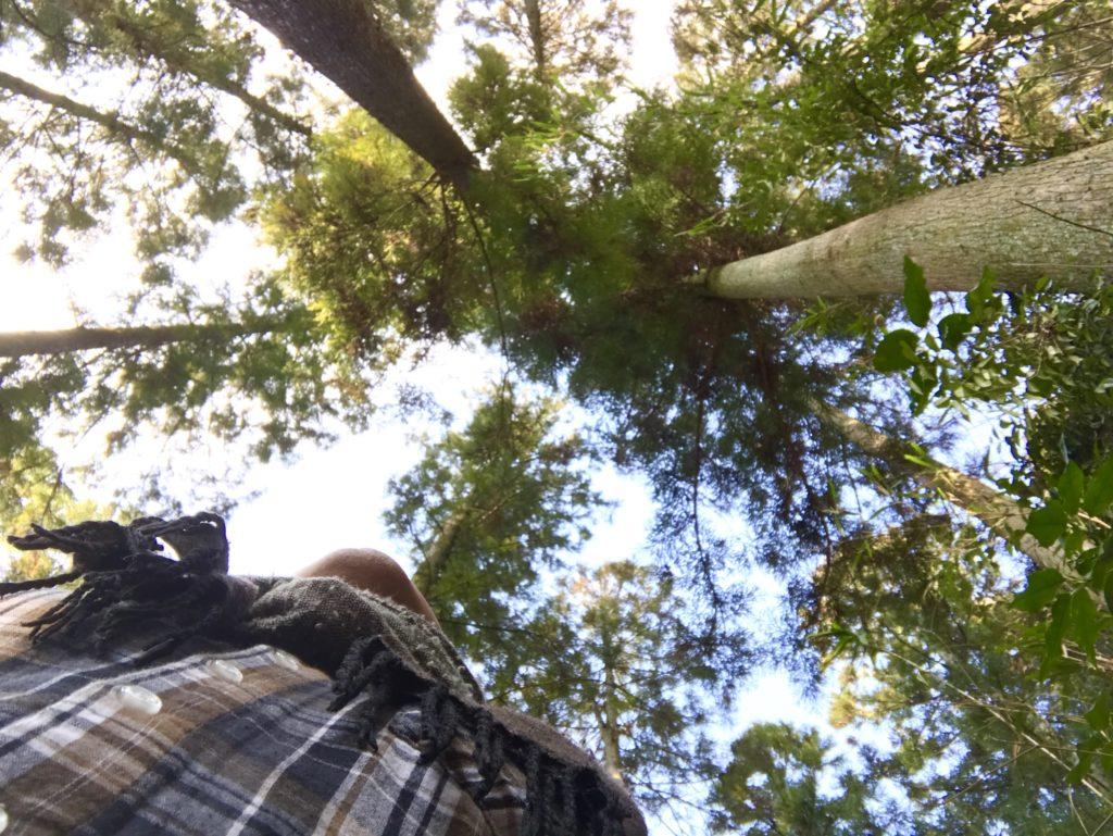 森に入ろう2