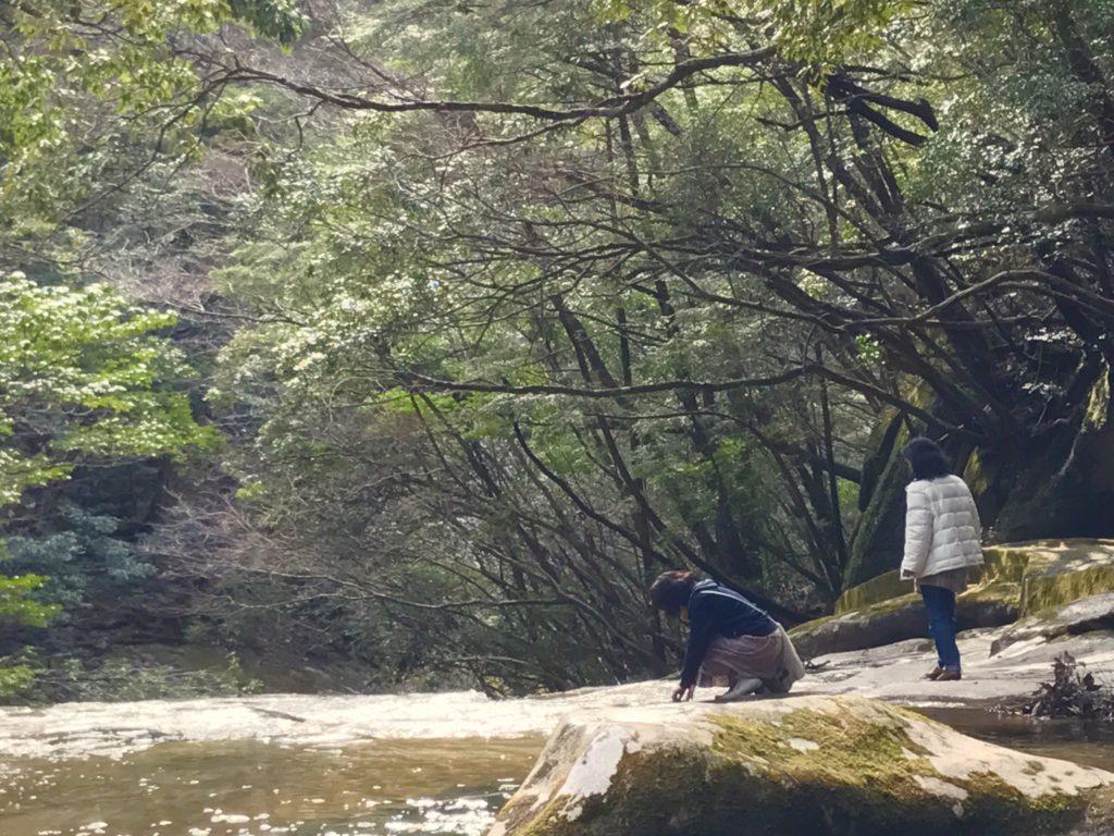 藤河内渓谷。