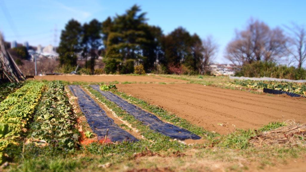吉井さんの畑。