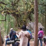 木に歌を聴かせると何が起こる?レポート「ごろんコンサート山抱きの大カシ」