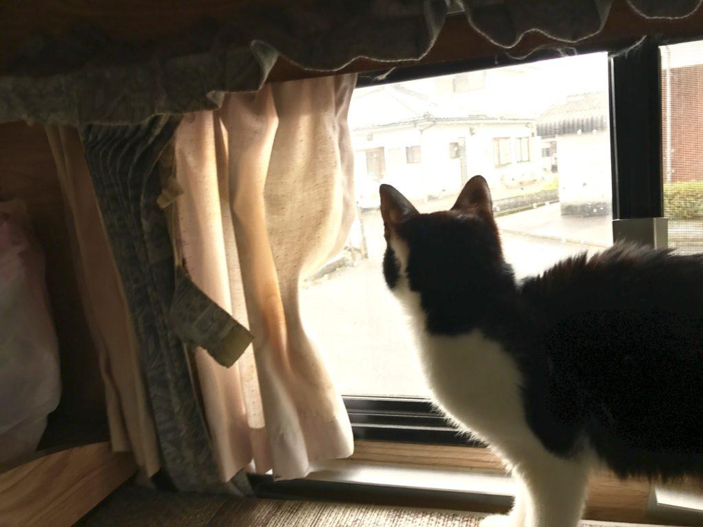 窓の外を見るタカモリ。