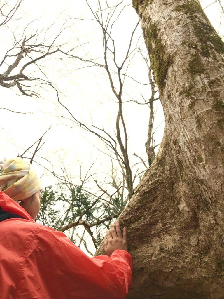 木に歌を歌う。
