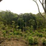続、その森をどう活用できるか。キャンピングカーで森の旅307日目、宮崎県延岡市。
