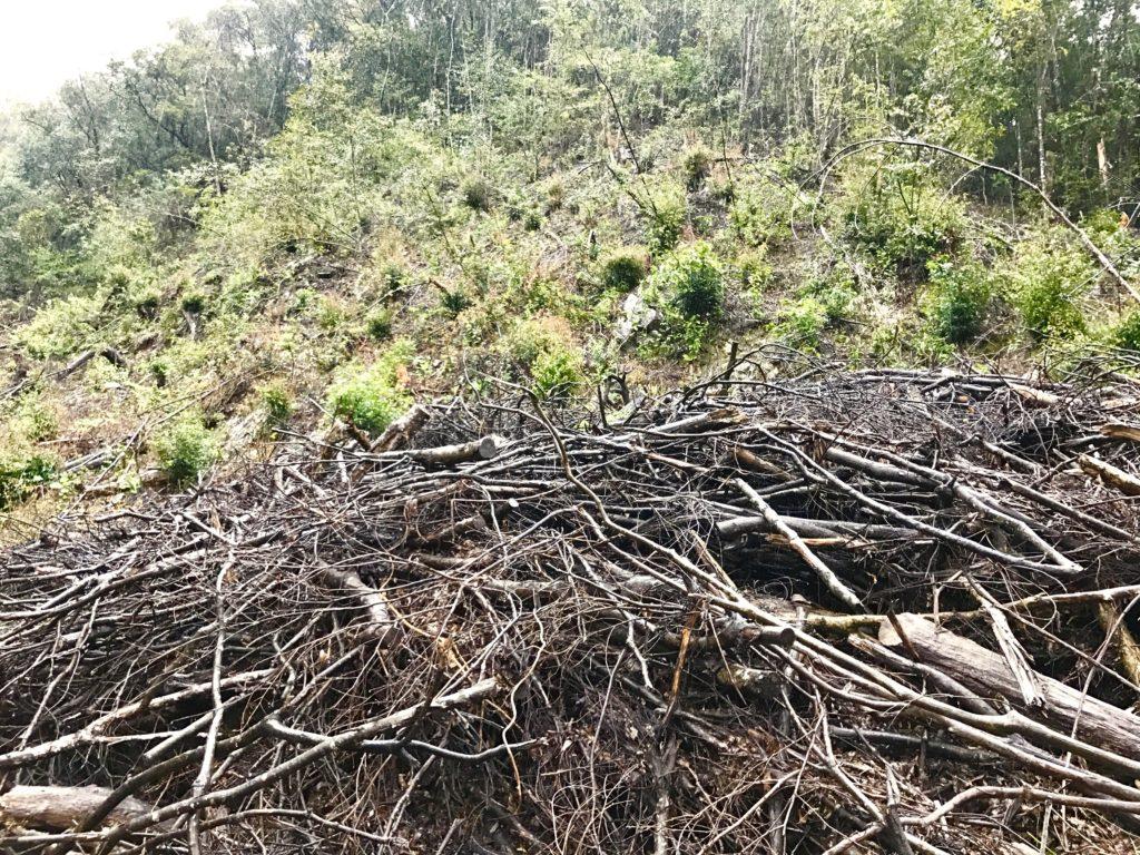皆伐と植林。
