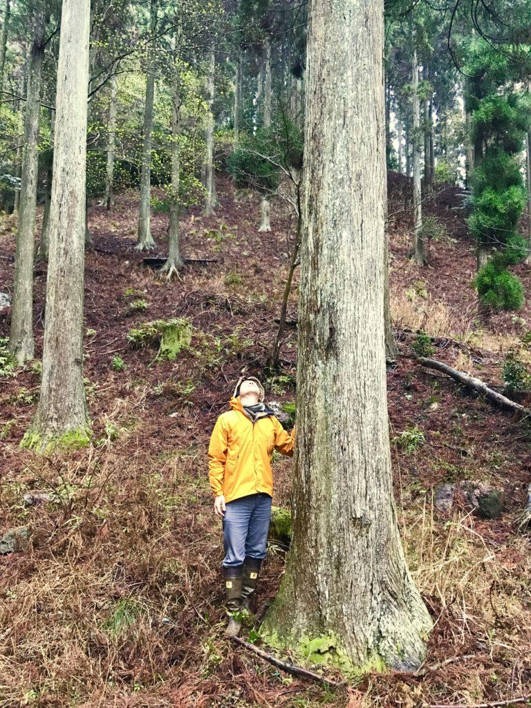大きな木2