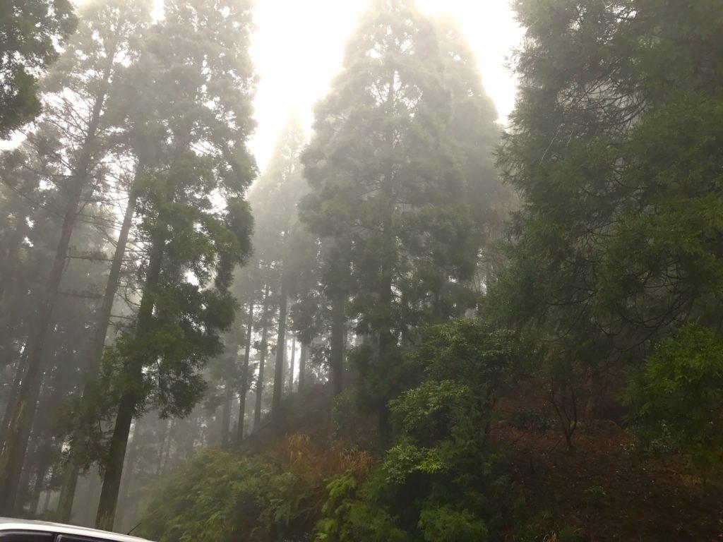 美しい森2