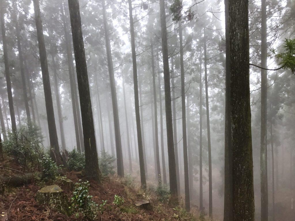 美しい森3