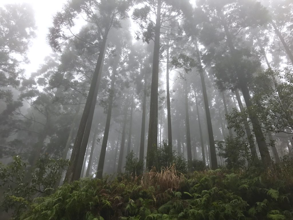 美しい森。