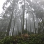 美しい森を作る人達「うすき林業」へ。キャンピングカーで森の旅308日目。