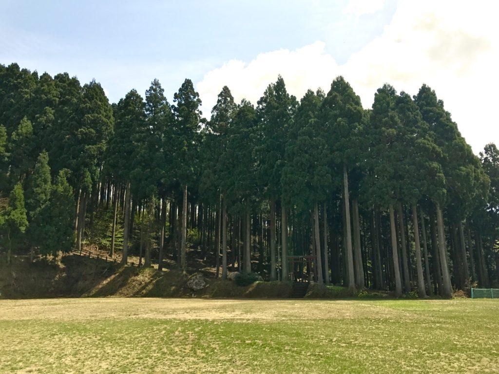 八ツ杉千年の森。