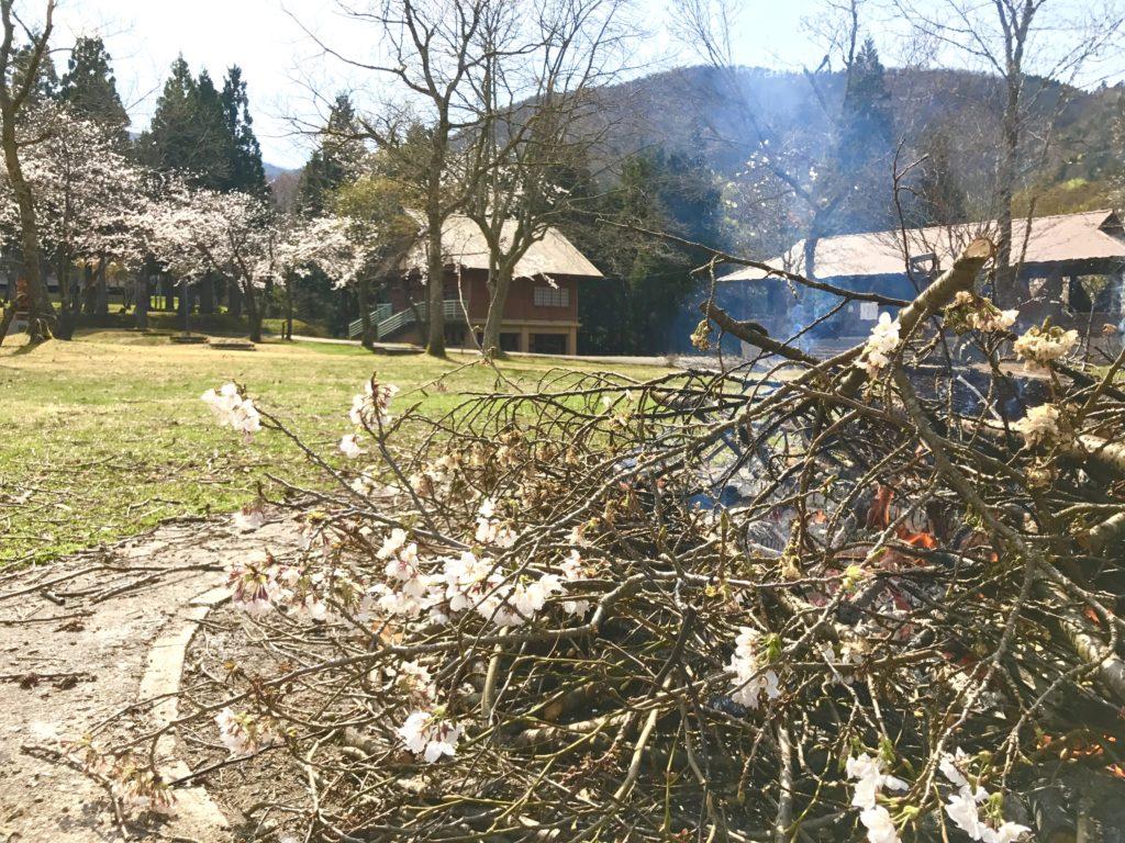 桜の枝を焼く。