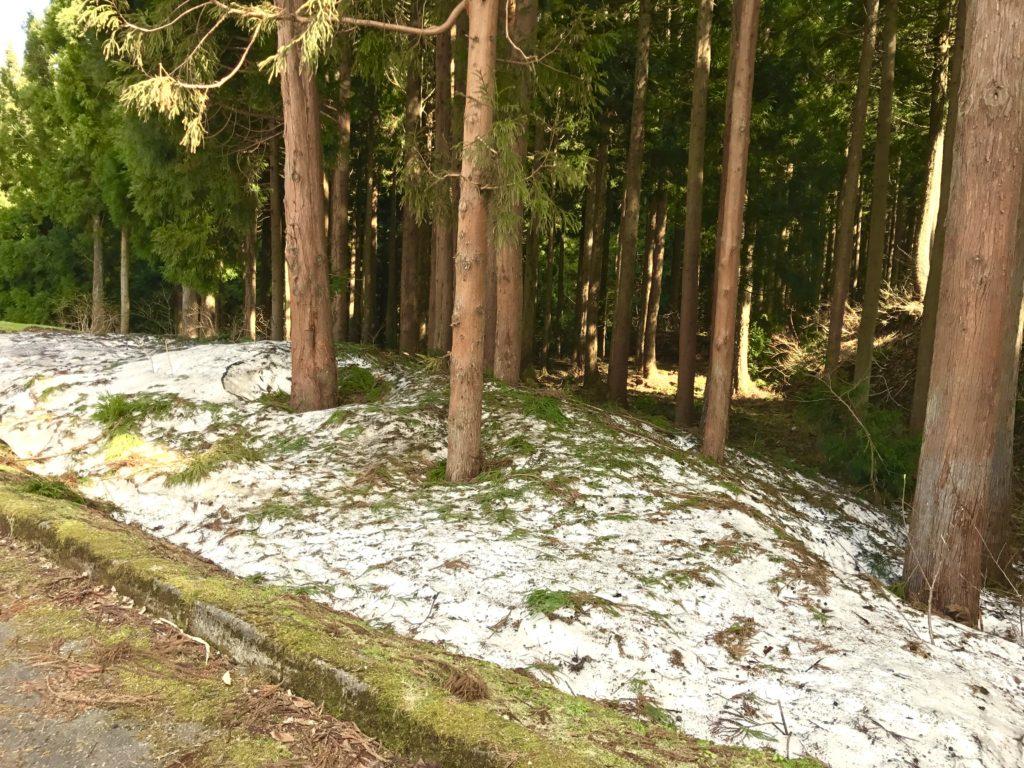 雪が残る。