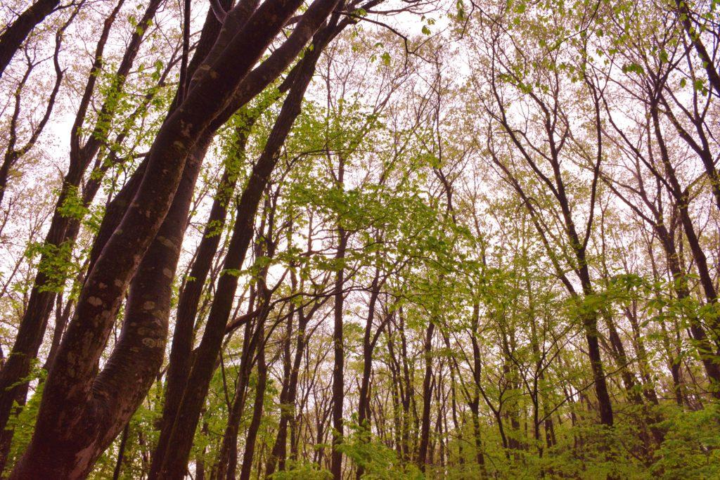 早朝の晴れた森。