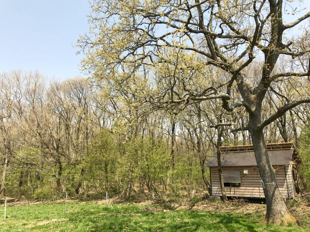ハックルベリーの森。