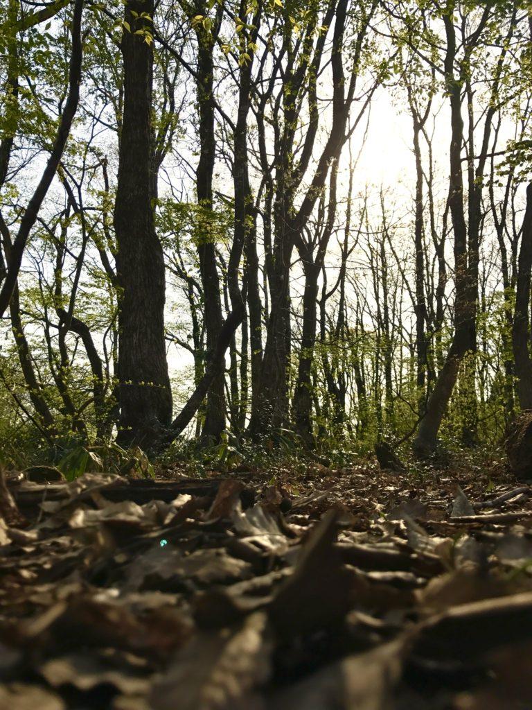ハックルべりーの森2