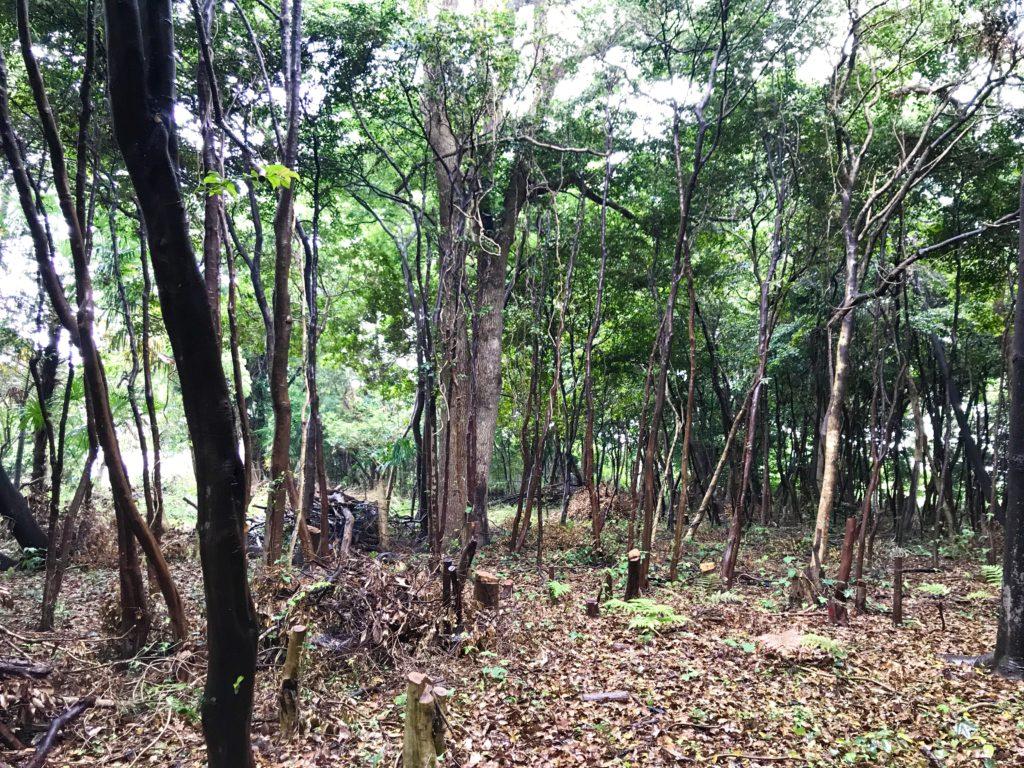 高木さんの森2