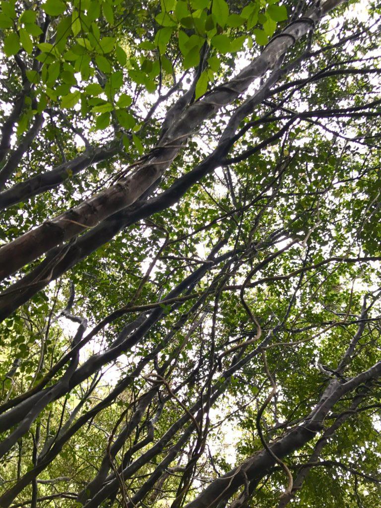 高木さんの森。