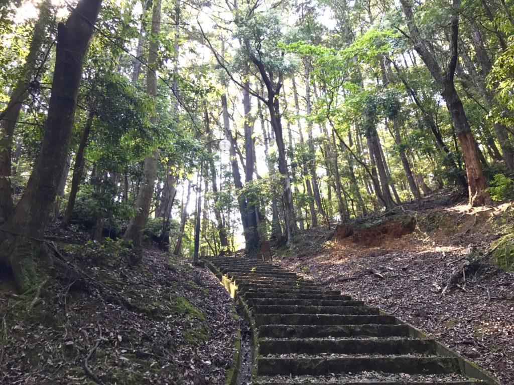 森の階段。