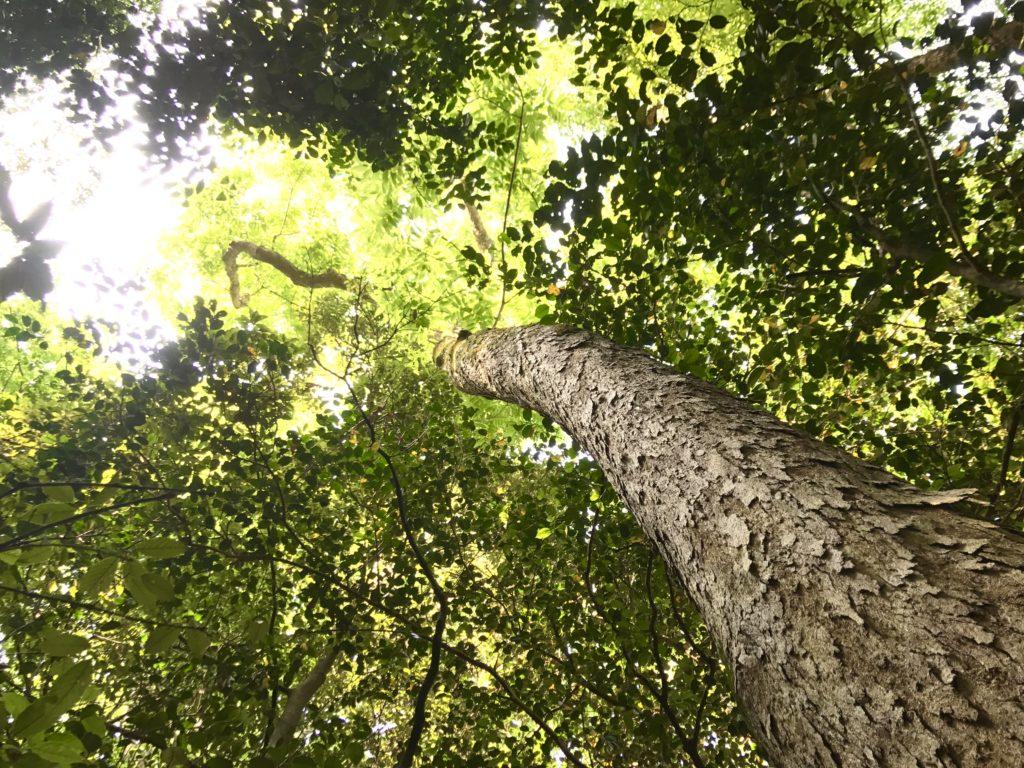 構内の森。