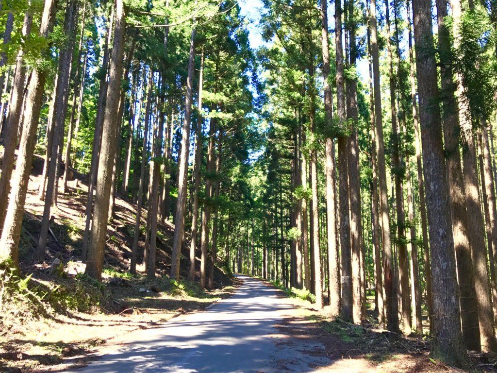 林業の研究林。