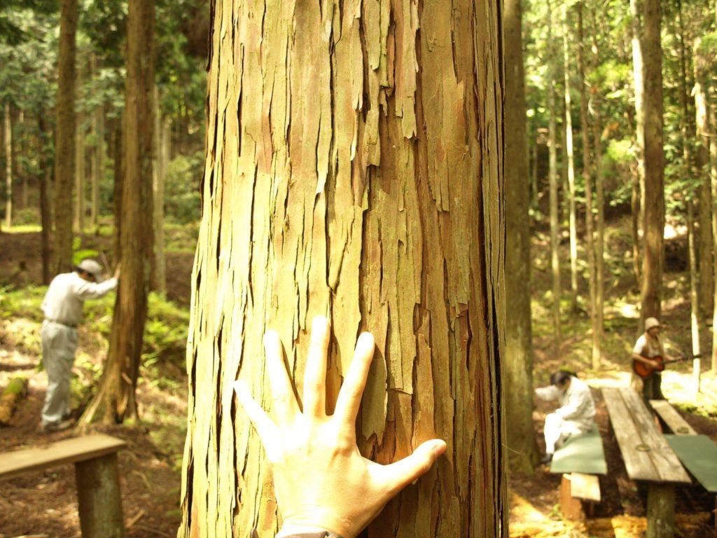 木に触れる。