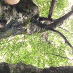 【長野】9/30(土)~10/1(日)標高1000mのエコビレッジ~瞑想と歌のキャンプ@今心imacoco