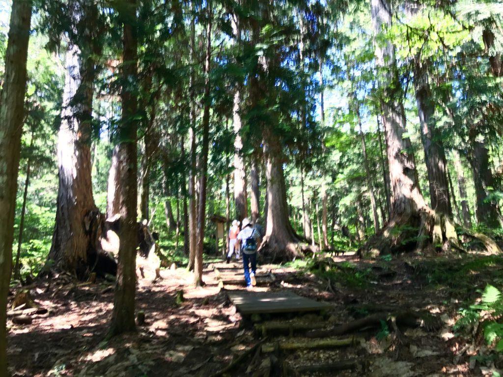 巨木エリアへ。