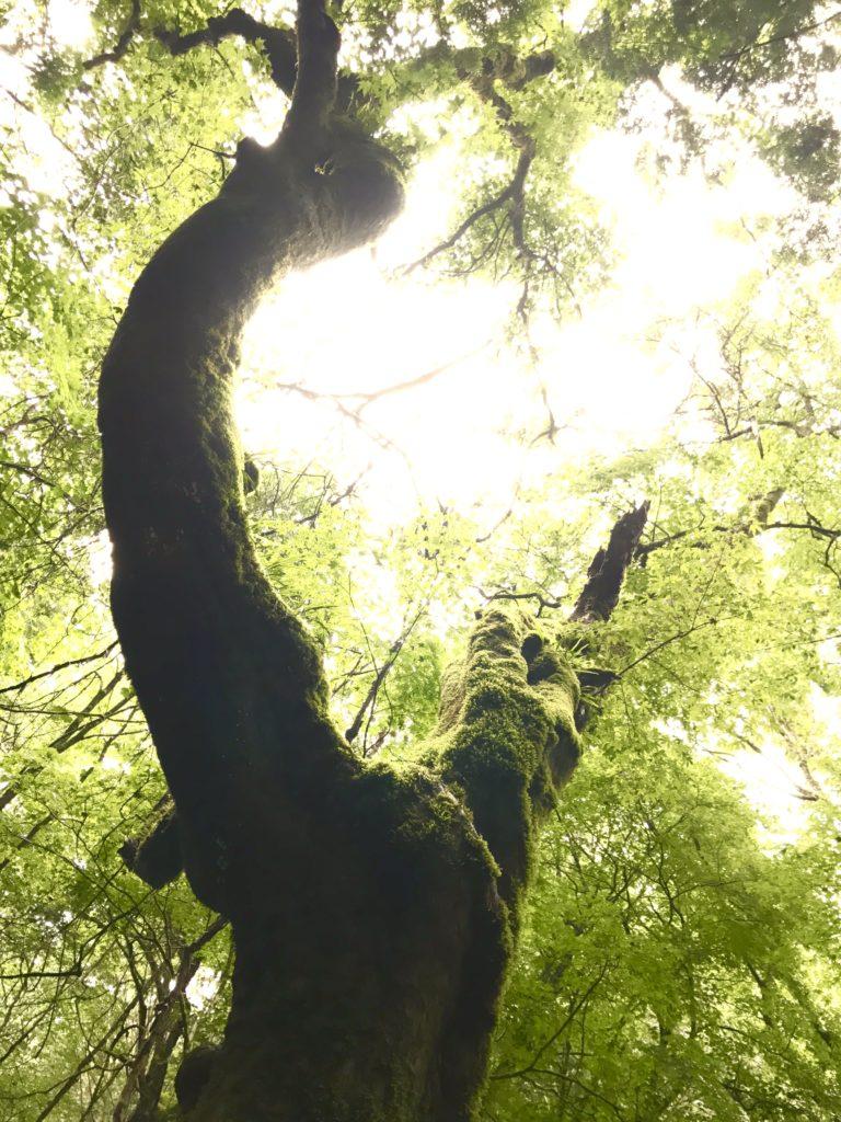 苔に覆われた木。