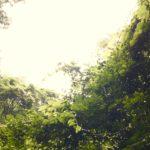 7/21(土)多摩川の源流で、あなただけのプレゼントソングを作る、癒しの歌トレッキング@水干
