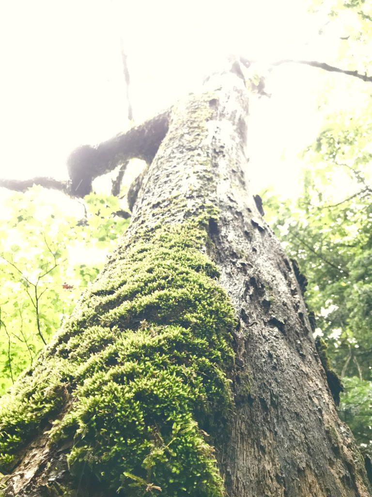 半分剥がれた木。