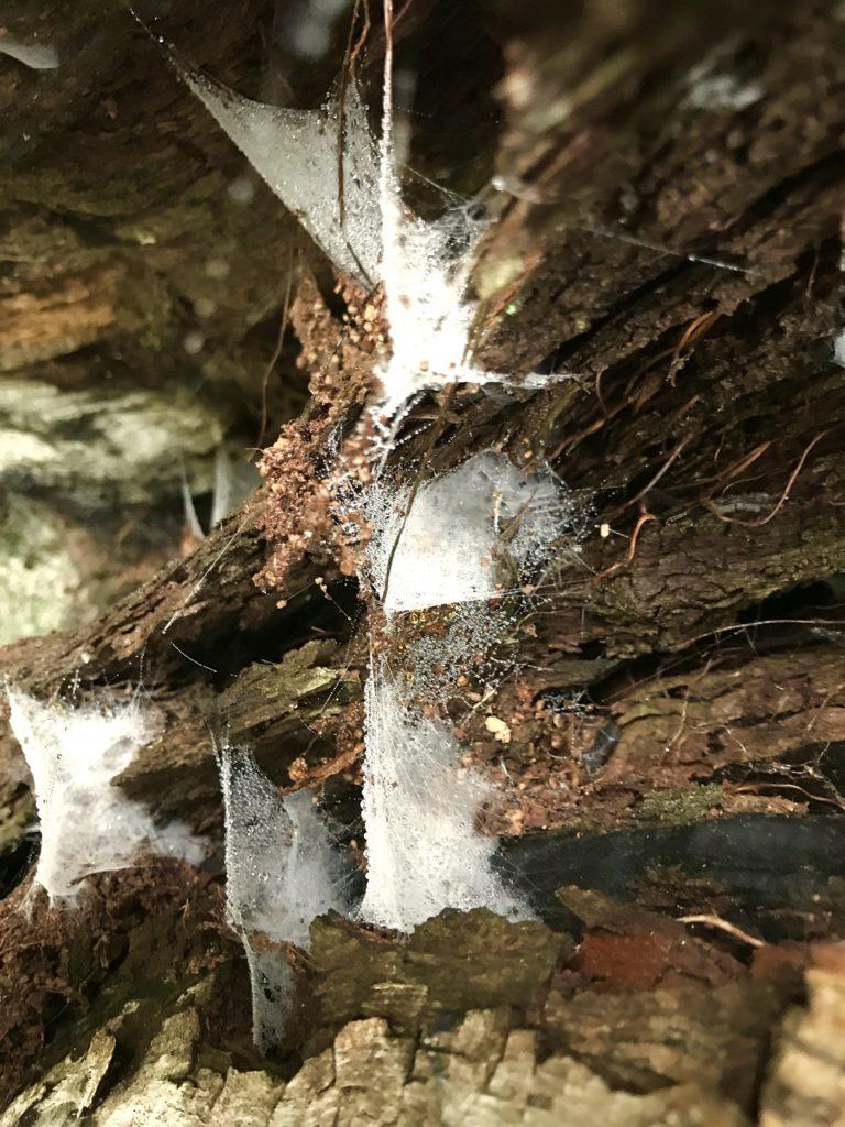 水滴と蜘蛛の巣。