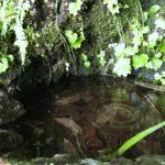 「水干」たくさんの生き物に助けられて出来る@多摩川源流レポ後編。