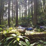 この森は私と親密なんだと言える。レポート「ウォーキングフラワーセラピーと森の歌@青梅市花寿庵」