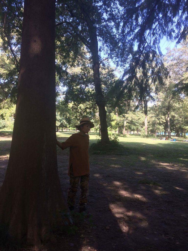 メタセコイヤの木の下で。