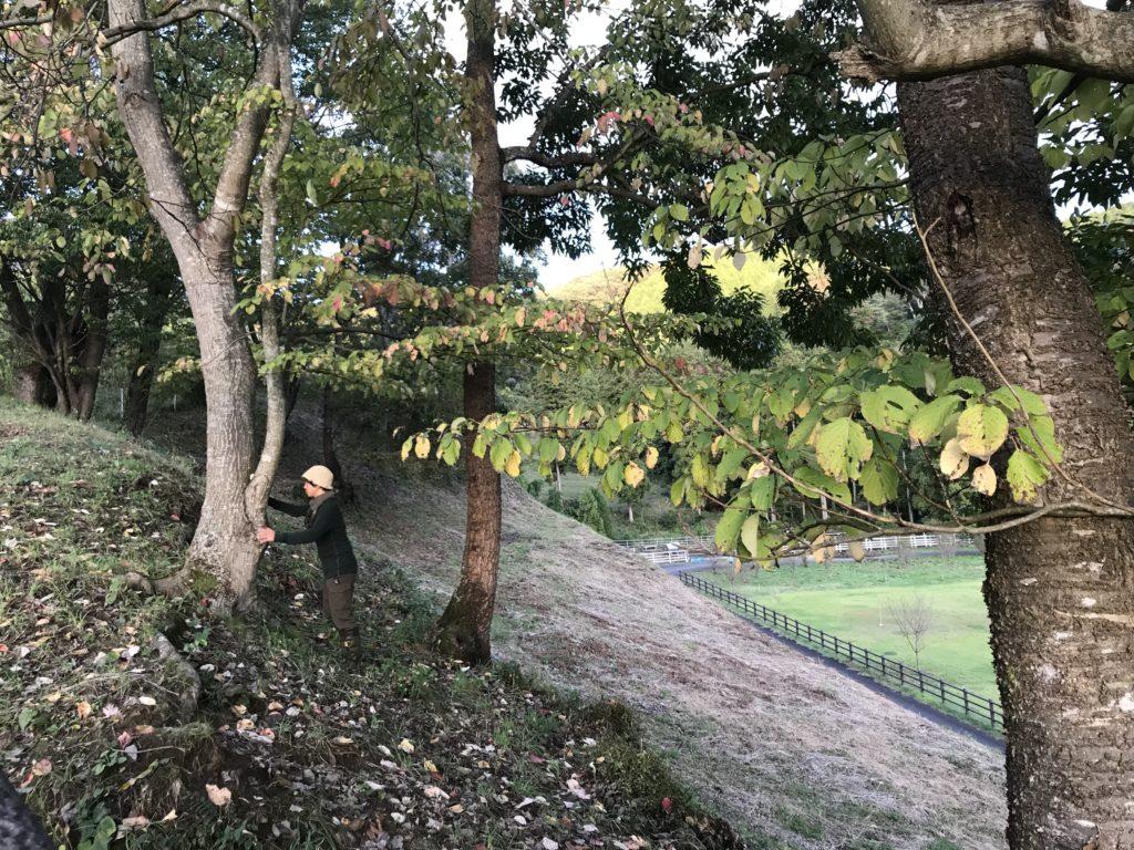 木に触れてみる。