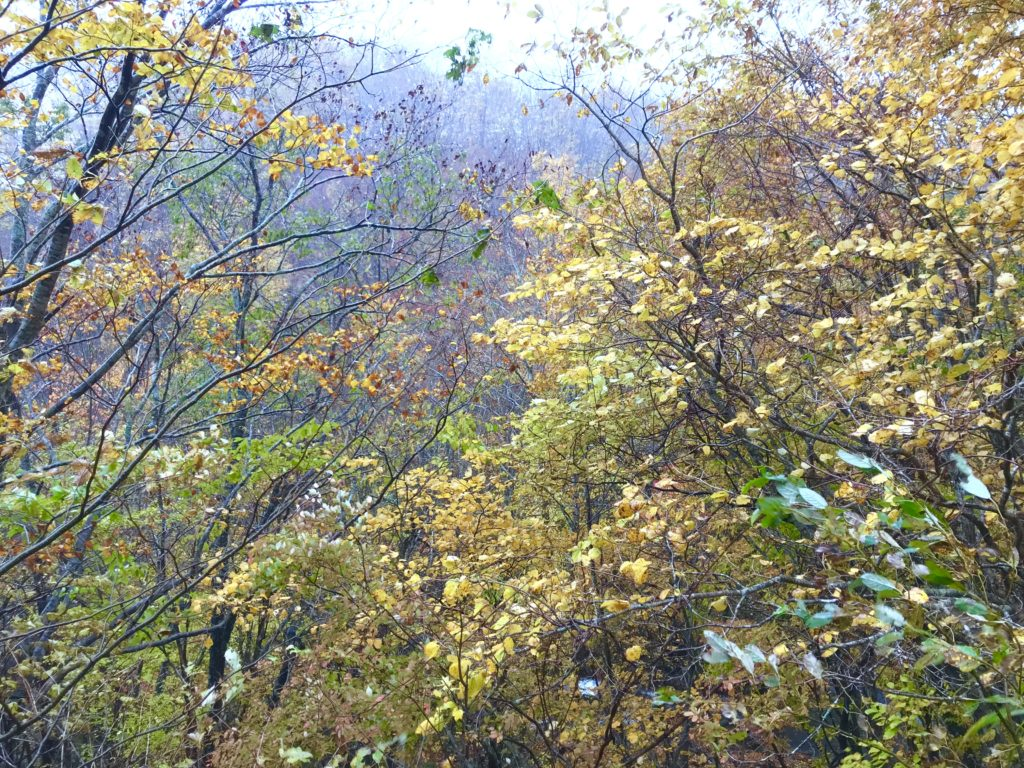ブナの森。