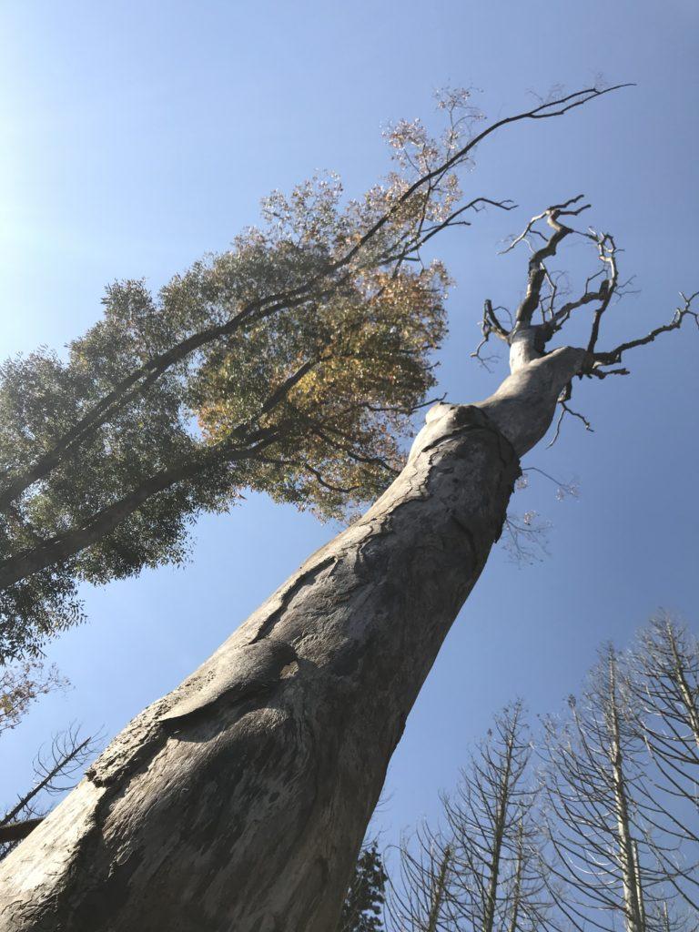 枯れた木1